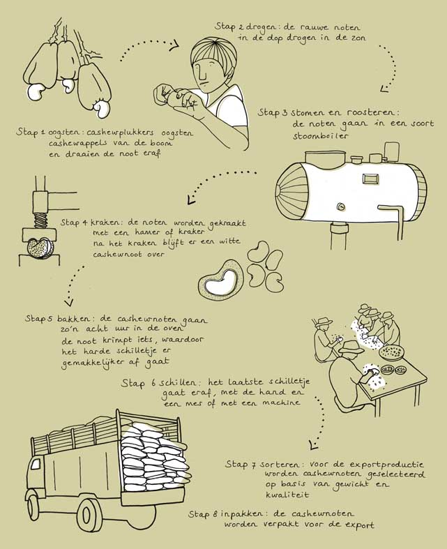 illustration infographic cashew rice groene garde sustainable cooking by ellen vesters illustrator graphic designer