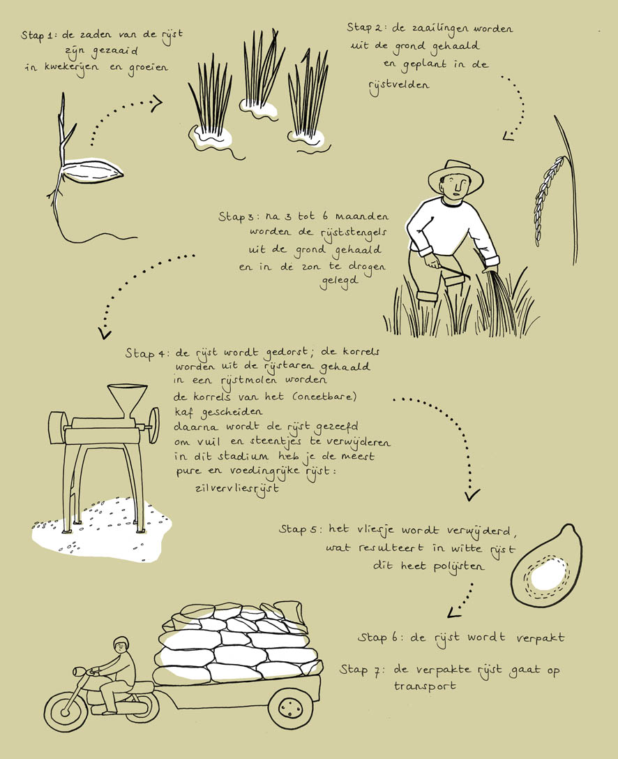 groene garde cookbook sustainability cycle of rice ellen vesters illustrator graphic designer